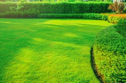 Garden with fresh green grass both shrub and flower front lawn background, Garden landscape design Fresh grass smooth lawn with curve form bush in house's garden care.