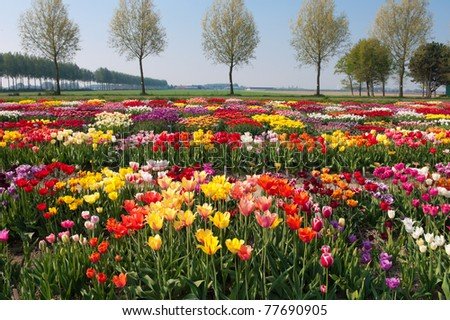 garden with hundreds of different kinds of tulips