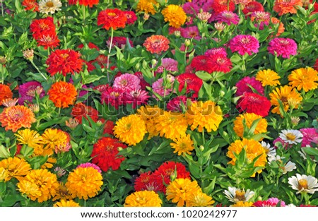 Garden with multicolored gorgeous flowers #1020242977