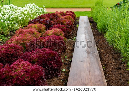 garden with variations of organic vegetables and salad growth and harvest #1426021970