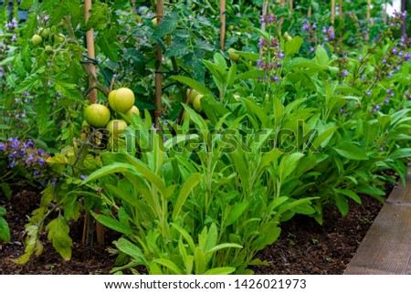 garden with variations of organic vegetables and salad growth and harvest #1426021973