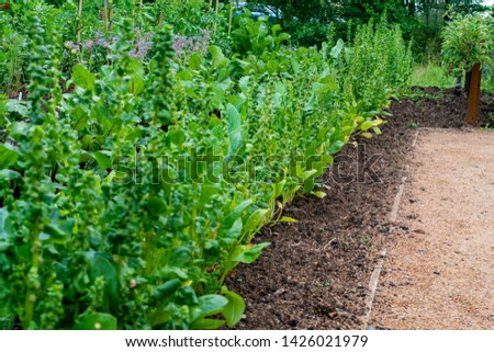 garden with variations of organic vegetables and salad growth and harvest #1426021979