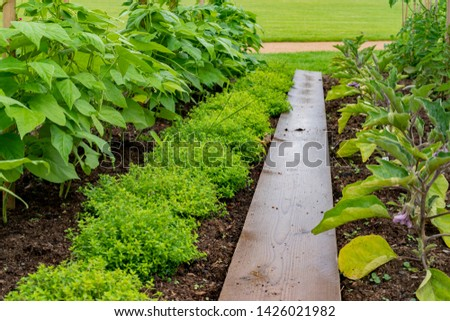 garden with variations of organic vegetables and salad growth and harvest #1426021982