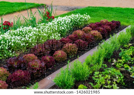 garden with variations of organic vegetables and salad growth and harvest #1426021985