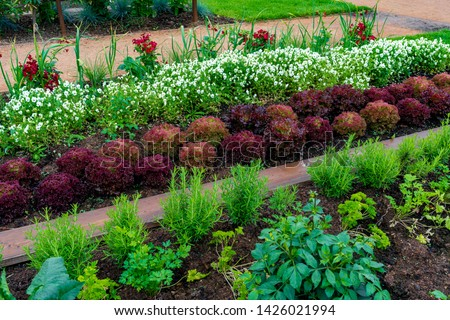garden with variations of organic vegetables and salad growth and harvest #1426021994