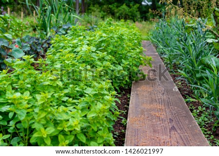 garden with variations of organic vegetables and salad growth and harvest #1426021997