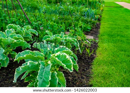 garden with variations of organic vegetables and salad growth and harvest #1426022003
