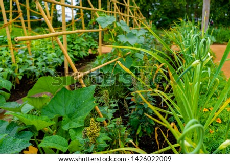 garden with variations of organic vegetables and salad growth and harvest #1426022009