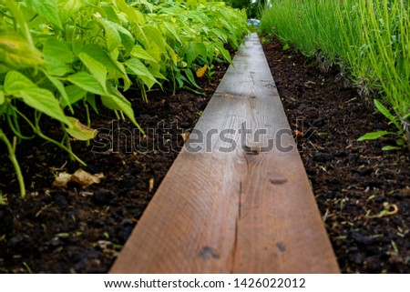 garden with variations of organic vegetables and salad growth and harvest #1426022012