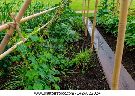 garden with variations of organic vegetables and salad growth and harvest #1426022024