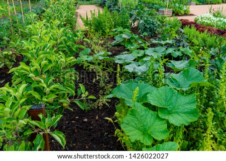 garden with variations of organic vegetables and salad growth and harvest #1426022027