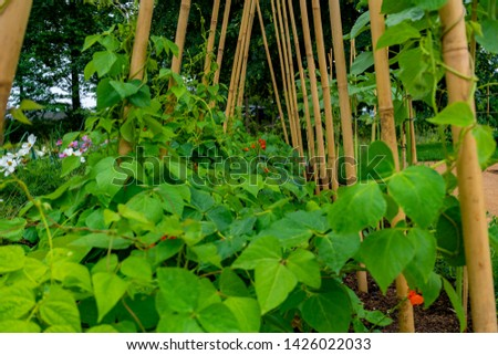 garden with variations of organic vegetables and salad growth and harvest #1426022033