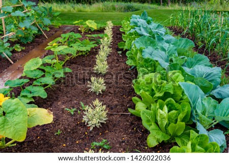 garden with variations of organic vegetables and salad growth and harvest #1426022036