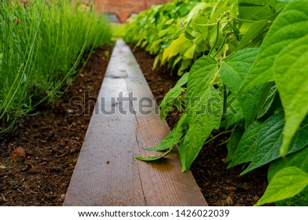 garden with variations of organic vegetables and salad growth and harvest #1426022039