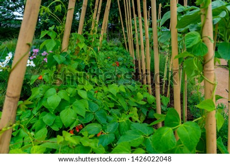 garden with variations of organic vegetables and salad growth and harvest #1426022048