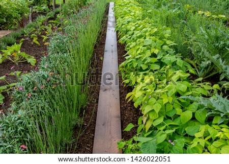 garden with variations of organic vegetables and salad growth and harvest #1426022051