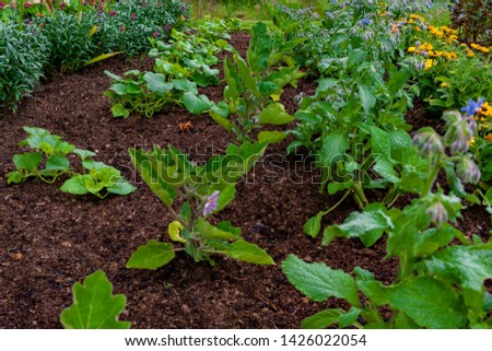 garden with variations of organic vegetables and salad growth and harvest #1426022054