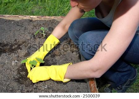 garden work - new sprout