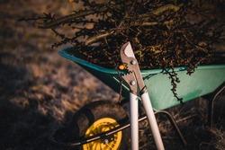 Garden work of spring. Green wheelbarrow in the garden. Garden wheelbarrow full of branches. Spring garden theme.