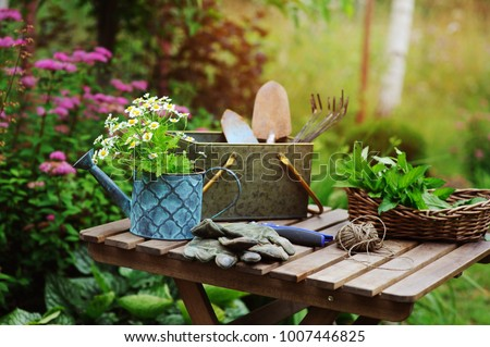 garden work still life in summer. Camomile flowers, gloves and toold on wooden table outdoor in sunny day with flowers blooming on background.