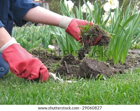 garden worker dig up a flower bed - stock photo