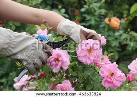 Gardener #463635824