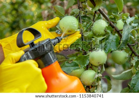 Gardener applying insecticidal fertilizer for fruit apples and protects against fungus, aphids and pests using sprayer ストックフォト ©