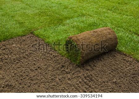Gardener applying turf rolls in the backyard