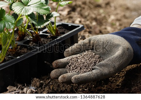 Gardener blending organic fertiliser humic granules with soil, enriching soil for plants to grow optimally. Organic gardening, healthy food, nutrients, self-supply, housework concept.