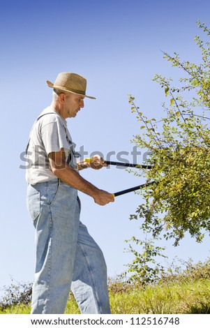 Gardener cutting back tree branches and hedge in garden, on sunny afternoon