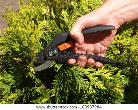 Gardener cutting branches with the help of shears - stock photo