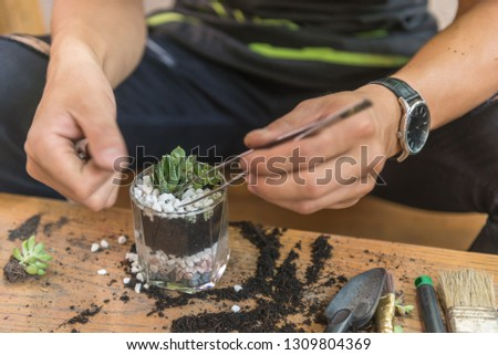 Gardener decorate the succulent plants on the glass with white gravel