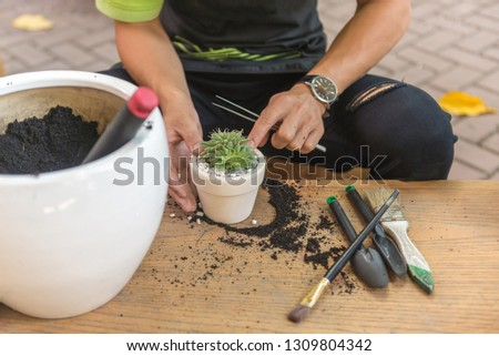 Gardener decorate the succulent plants with white gravel