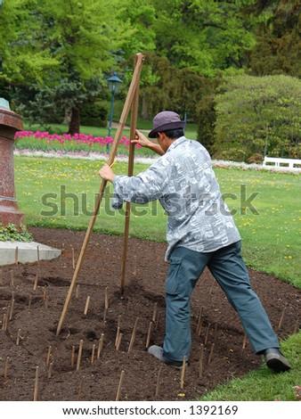 Gardener designing flower-bed using wooden caliper - stock photo