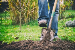 Gardener digging in a garden with a spade. Man using a big shovel for digging old lawn.