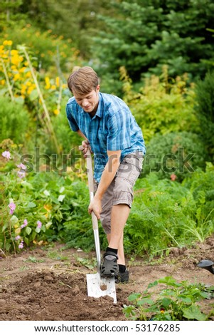 gardener digging the soil in spring with a spade to make the garden ready