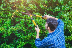 Gardener hedge trimming or rip bush with grass shears gardening scissors activity working during stay home at backyard.