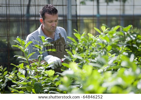 Gardener in a green house