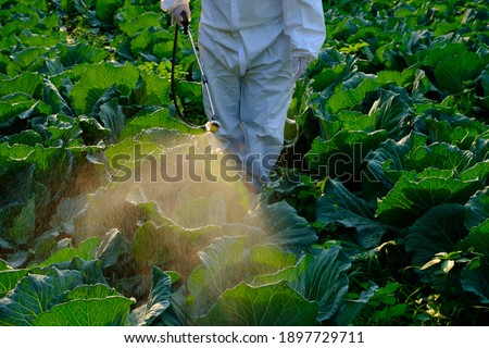 Gardener in a protective suit spray Insecticide and chemistry on cabbage vegetable plant  Foto stock ©