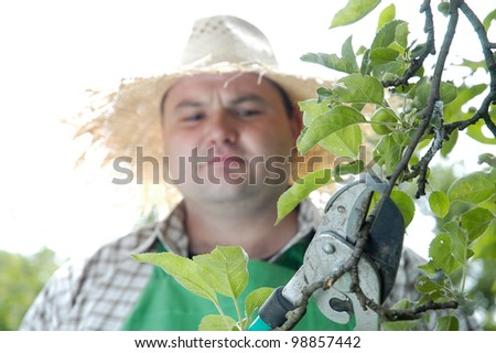 gardener  lops an apple tree