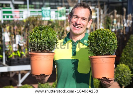 Gardener or employee at garden center posing with two boxtrees