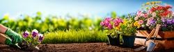 Gardener planting flowers in the garden