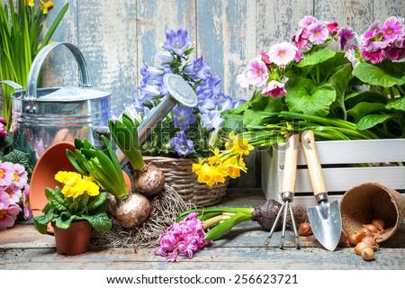 Gardener planting spring flower #256623721