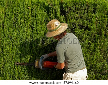 Gardener pruning a hedge with an electric pruner