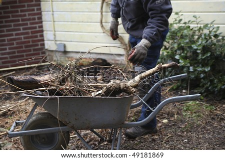 Gardener pruning and taking roots out of earth into wheelbarrow