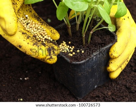 Gardener putting a fertilizer in the ground