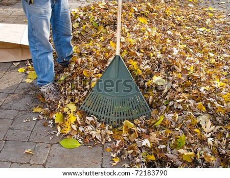 Gardener raking fall leaves