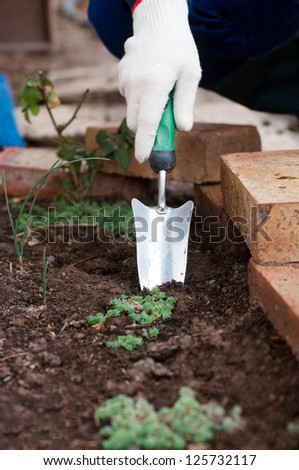 Gardener's hand in glove using garden trowel