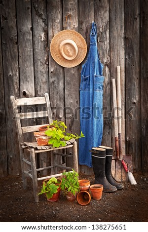 Gardener's tools by an old shed with potted squashes and a tomato ready for transplanting