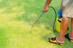 gardener spray herbicide to kill weed in the lawn in garden
